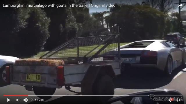 Lamborghini Murcielago to towing a trailer carrying goats in the back