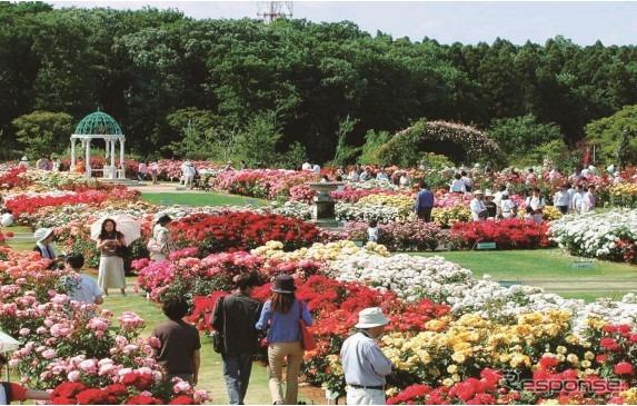 Keisei Keisei กุหลาบสวน (รูปภาพ)