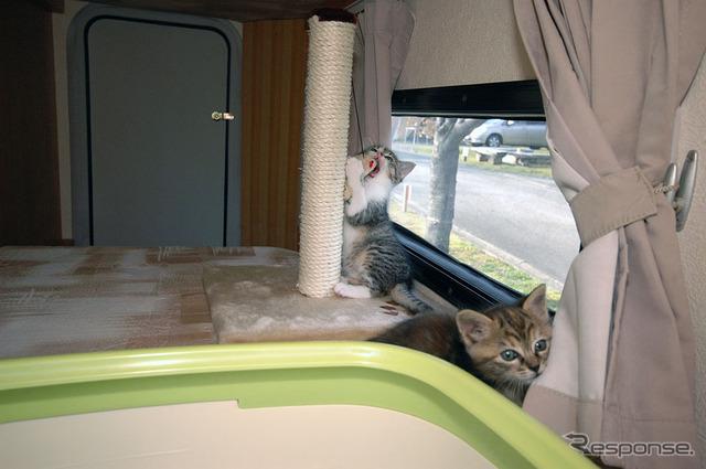 Pets in motorhome Interior