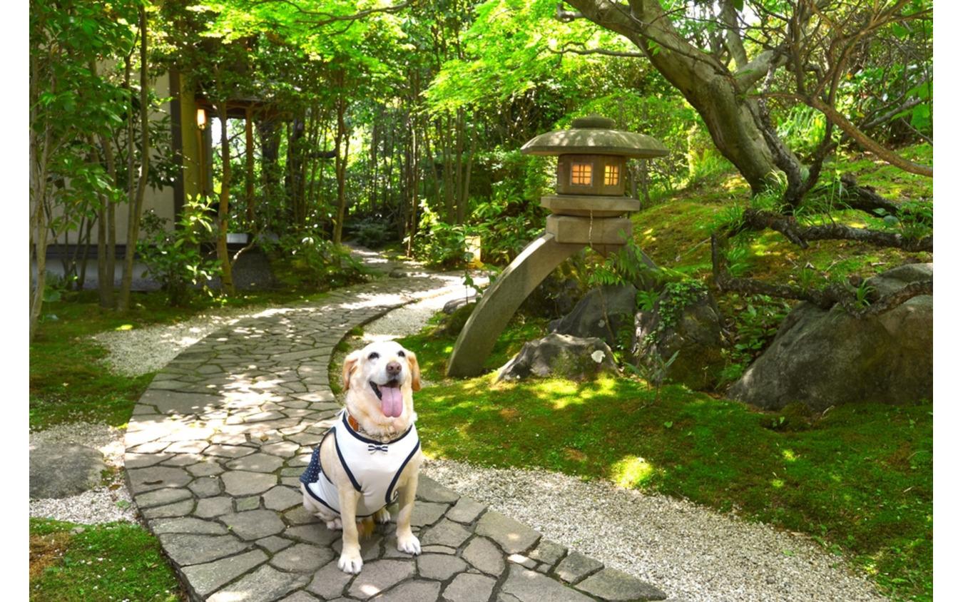 温泉と食事が魅力の愛犬同伴型温泉宿6選