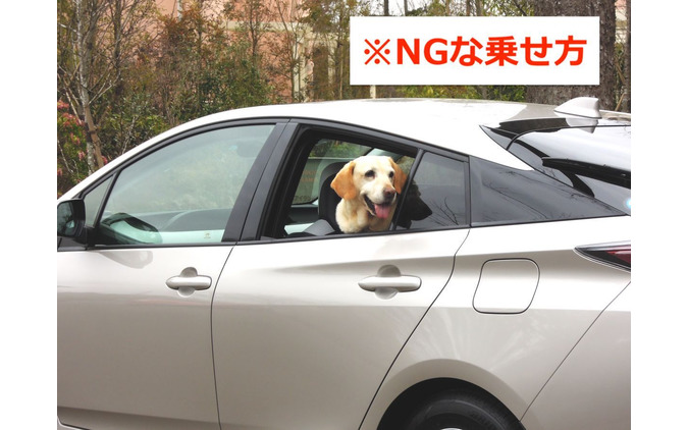 ドライブ時、正しい愛犬の乗せ方