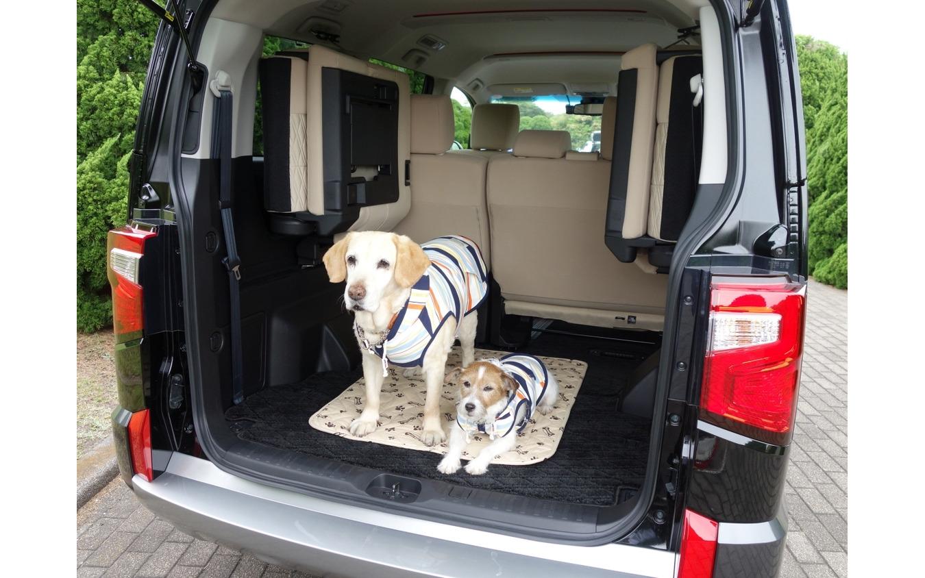 愛犬とアウトドアを楽しむのに最適なクルマとは?
