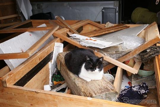 東日本大震災 離島の猫たちも無事だった