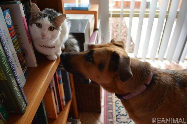 [リアニマル]ペットの資格:愛玩動物救命士…取り方や活かし方 | レスポンス(Response.jp)