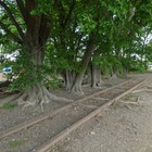 西武鉄道、安比奈線の車両基地整備計画を廃止…休止から半世紀の「廃線」