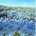 はとバス、春の日帰りツアー全135コースを設定…お花見コース充実