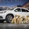 スバルの3列SUV アセント、最新コネクト搭載…高速LTE通信も【ロサンゼルスモーターショー2017】