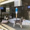 伊丹空港、国内空港初の「愛犬専用トイレ」を設置