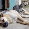 【アンケート】ペットに関する意識調査にご協力ください