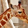 新型コロナ対策で動物園が休園、SNSで配信続ける…まとめ[リアニマル]
