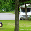 8割以上が「キャンプはいつもペットと一緒」…日本RV協会調べ