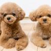 愛犬との生活で気をつけたいこと…マナーを守り、価値観の違いを意識しよう[リアニマル]