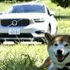 【柴犬ハルの気になるクルマ】ボルボ XC40リチャージ…余裕の顔つき!? 上級モデルに通じる快適さ