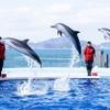 JAFフェスティバルを四国水族館で開催…エサやり体験も 12月5日