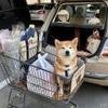 【柴犬ハルの気になるクルマ】コンパクトカーで送るハルのリアルな日常生活