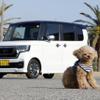 ホンダ 新型 N-BOX Customで愛犬と日帰りドライブ…安全で快適なペット用アイテムが活躍