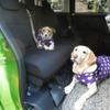 【青山尚暉のわんダフルカーライフ】小は大を兼ねる!? プチバンが大型犬&多頭乗車に適している理由