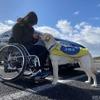 JAF×日本介助犬協会、思いやりある交通社会をめざしクラウドファンディング