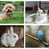 【インターペット2021】2年ぶり開催…ブームの中、動物福祉を考える 4月1-4日