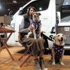 【青山尚暉のわんダフルカーライフ】愛犬同行避難に理想的なキャンピングカーと災害時の対策