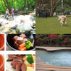 くるまの旅ナビ、ペットと泊まれるホテル100選を発表…1位は「ドッグスパリゾート アルトピアーノ」