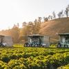 ヤマハ発動機とクボタ イチゴ自動収穫ロボット開発の米国スタートアップに追加出資