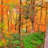 紅葉が美しいキャンプ場100選…1位は「九頭竜レイクサイドモビレージ」 くるまの旅ナビ