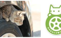 日産「猫バンバン」プロジェクト、特設サイトオープン…乗車前にボンネットを叩く 画像