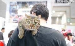 【インターペット16】ペットの祭典、今回はニャンと猫関連の出展増加 画像
