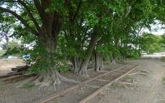 西武鉄道、安比奈線の車両基地整備計画を廃止…休止から半世紀の「廃線」 画像