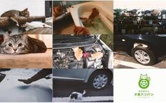 日産、「#猫バンバン」プロジェクトムービーを公開…事故防止を呼びかけ 画像