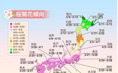 桜の開花予想、東京が全国に先駆けて開花…ウェザーニューズ 画像