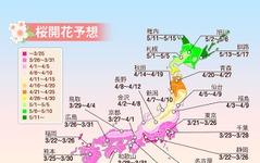 桜開花予想、今年は東京が1番乗り ウェザーニューズ 画像