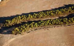 エアバス、ユーカリから製造した航空機用バイオ燃料の研究で「良好な結果」 画像