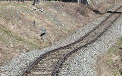 地震で不通の大糸線、県境部の再開めど立たず 画像