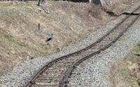 トンネル内で脱線の長良川鉄道、10日ぶり全線の運転を再開 画像