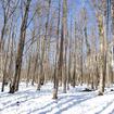 森のドッグガーデンは広大なスペースで自由に走り回ることができる