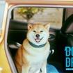 DOG & DRIVE 獣医と考える、快適なクルマ「遠出篇」