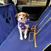 ペット旅ではホンダアクセスの「Honda Dogアクセサリー」が活躍