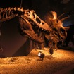 恐竜博2011、国立科学博物館(東京・上野公園)