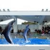 九十九島パールシーリゾートの「イルカのプログラム」も人気。ずぶ濡れにならないように注意