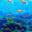 九十九島パールシーリゾートの水族館「海きらら」
