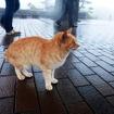 """SASEBOクルーズバス『海風』で雨の弓張岳展望台へ。ここを知り尽くす""""地ネコ""""も「きょうはまったく見えないねこりゃ」と……!?"""