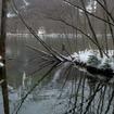 湿地帯。水深の浅いところはすでに結氷しはじめていた。厳寒期はすべて凍る。