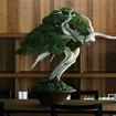 加藤蔓青園の盆栽「真柏」(写真はイメージ)