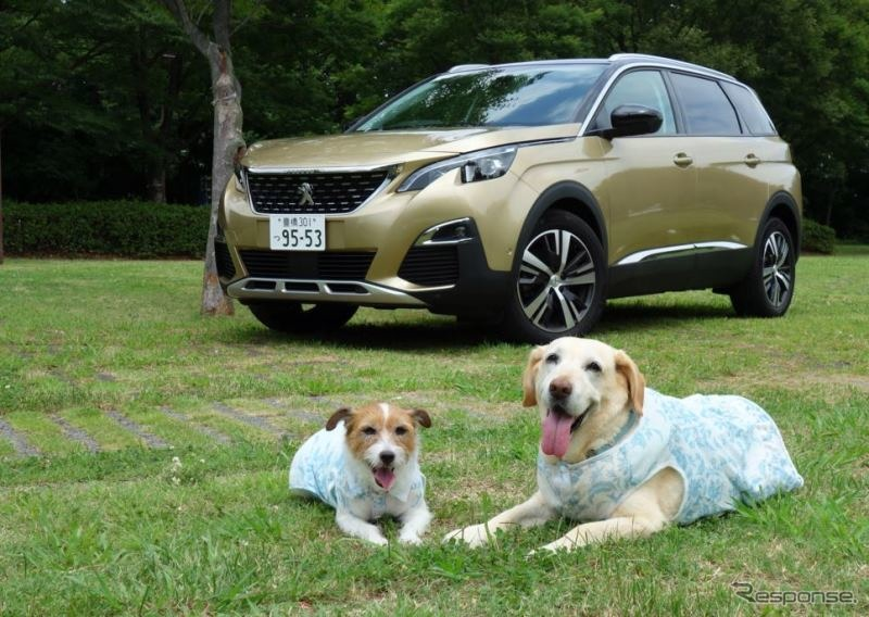 愛犬とドライブするためのクルマを考えた場合、どうしても大きなクルマを想像しがち…。